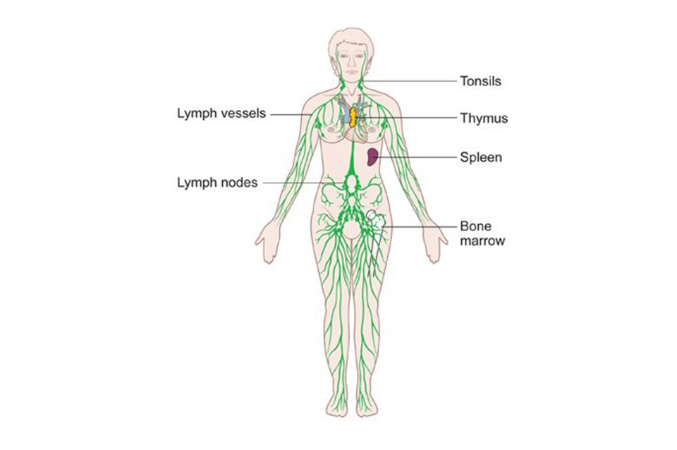 Your Lymphatic System: Part 1 - Valley Medical Weight Loss